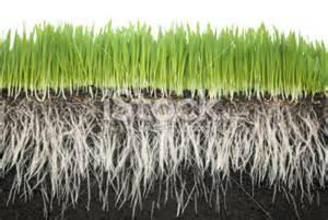 Grass Roots... original lineup...